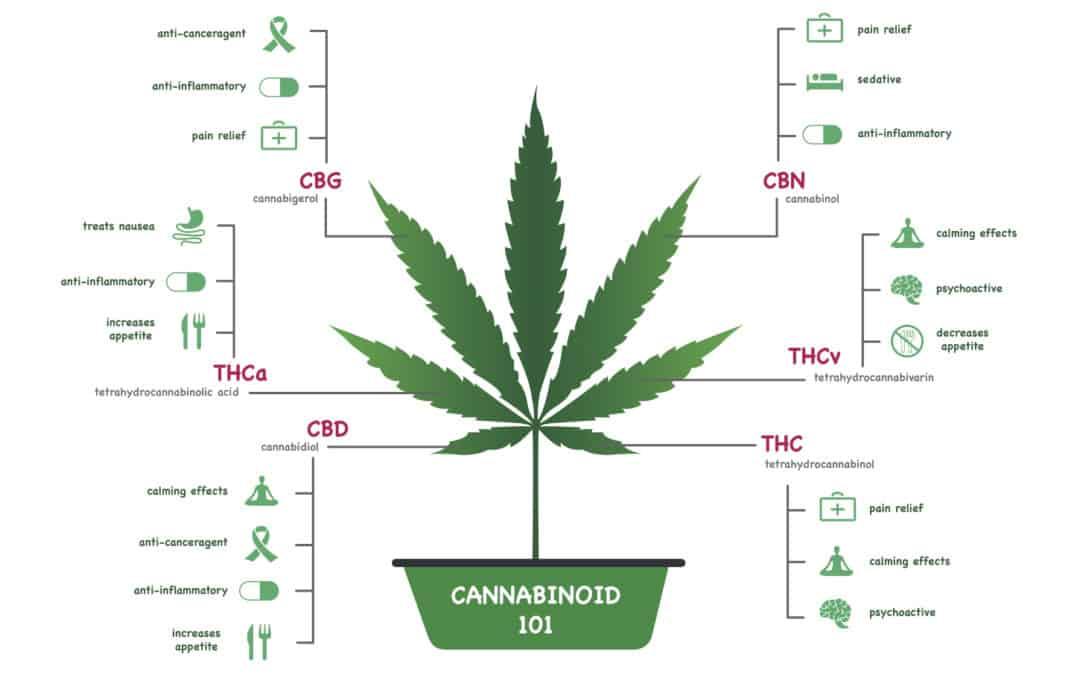 Wellness & Cannabinoid Therapy