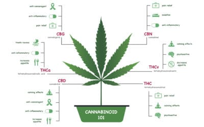 Wellness & Cannabinoid Therapy